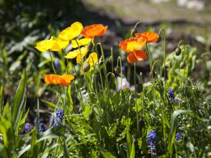 Terveisiä kasvimaalta, onhan kevät ja uuden kasvun aika!